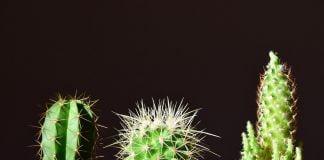 cura piante grasse
