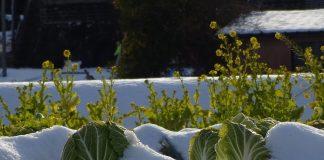 orto gennaio