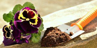 Concime piante fai da te
