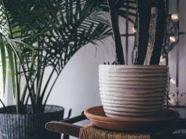 Concimare piante appartamento