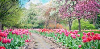 Lavori giardino marzo