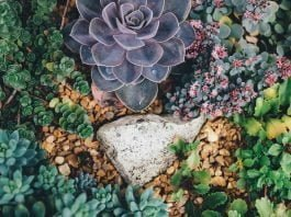 Aiuola piante grasse